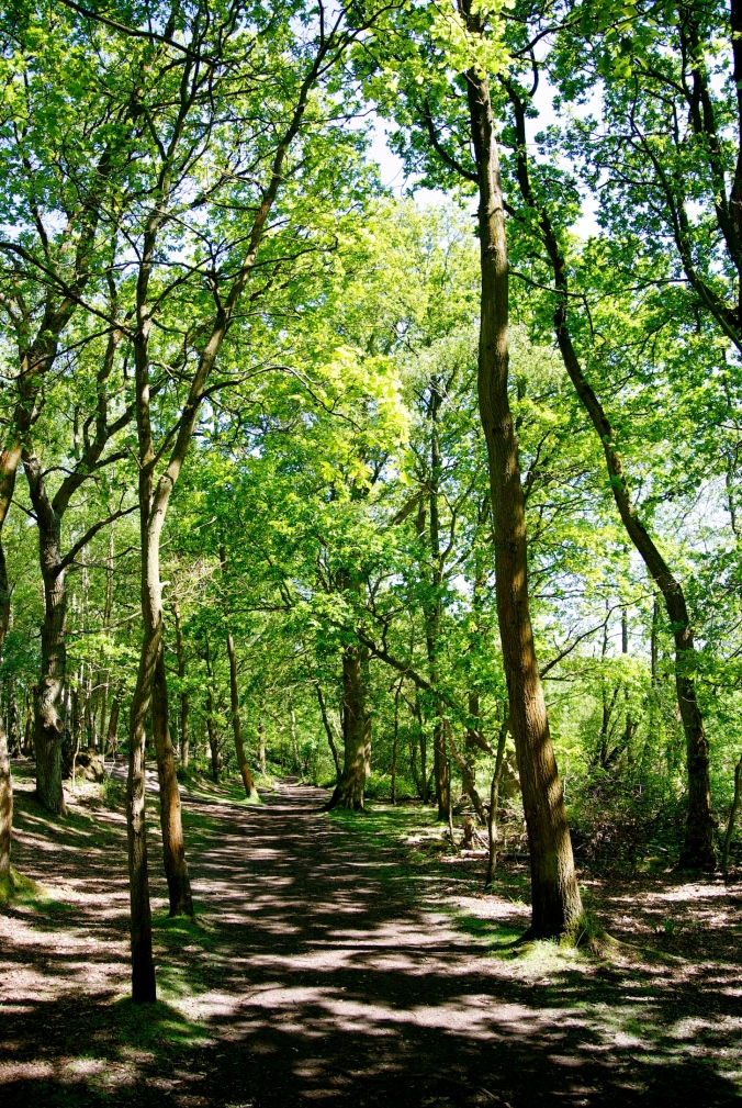 Fleet Pond woods