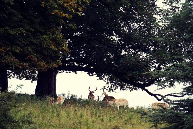 Dyrham Park2