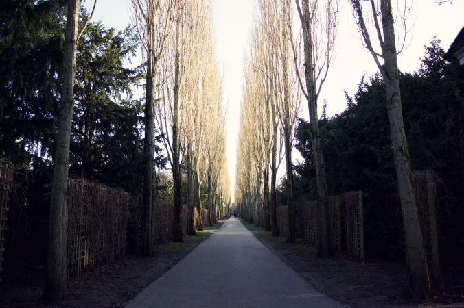 Assistens Kirkegård