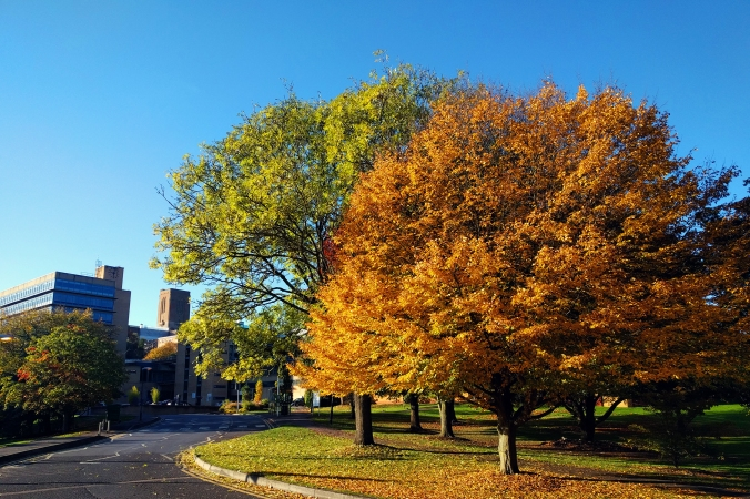 Campus autumn