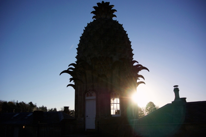 Pineapple_2