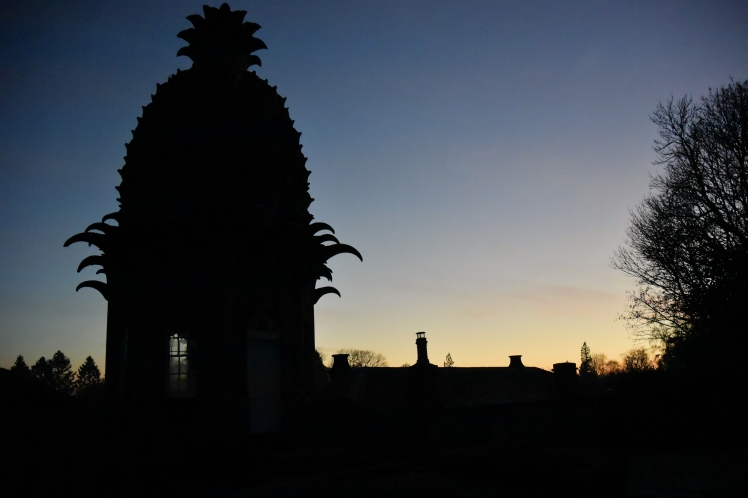 Pineapple_5